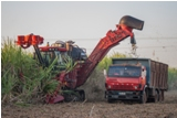 Cuba Seeks Efficiency in Sugar Cane Harvest Despite Unstable Weather