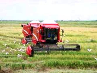 The province hopes to sow in the rice year 21 300 hectares, with which about 35 200 tons of rice might be obtained, mainly to cover the monthly familiar basket.