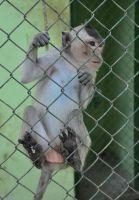 zoológico-6-web