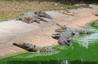 criadero-cocodrilos-_minas