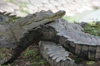 criadero-cocodrilos-_minas2