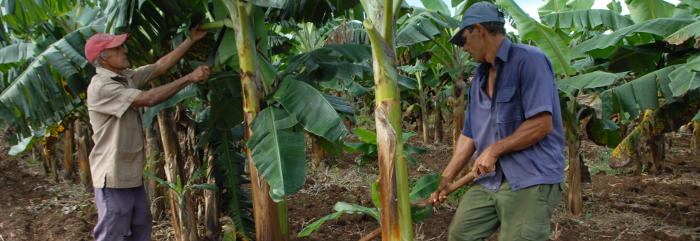 Committed Agriculture in Camagüey with the greatest productive challenges