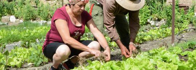 Camagüey´s Community of Altagracia with good agricultural practices