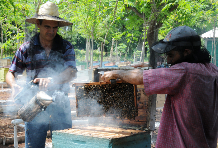 Positive indexes of Honey Production in Camagüey