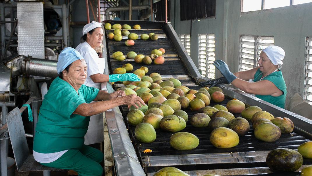 Diversifica producción de alimentos empresa conservera del norte camagüeyano